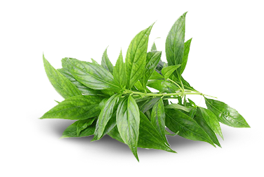 Leaf grass ingredients png