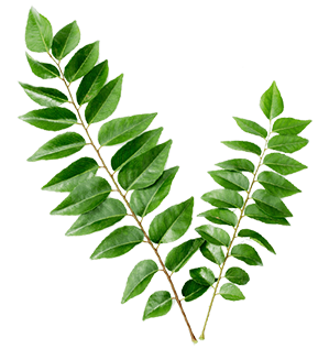 Organic Leaves png
